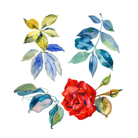 Set of red roses isolated on white background. Hand painted illustration.