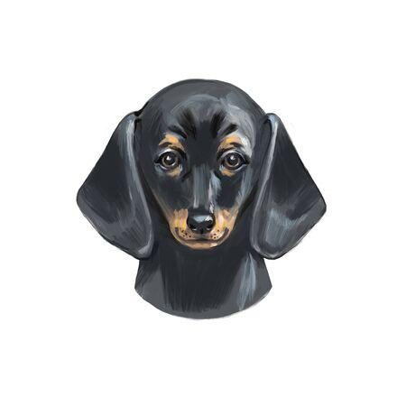 Digital Illustration of Cute Purebred Dachshund Dog.