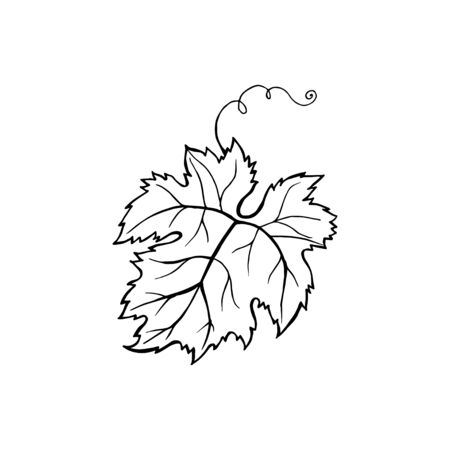 Vector leaf design. Hand drawn minimalism style vector illustration.