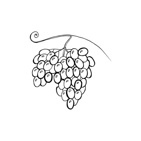 Vector illustration of watercolor grapes, hand drawn. Concept for farmers market, organic food, natural product design, wine package, herbal tea, grape seed water or oil. Ilustrace