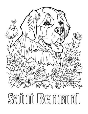 St. Bernard portrait. Coloring page for adults and children. Vector illustration isolated on white background.