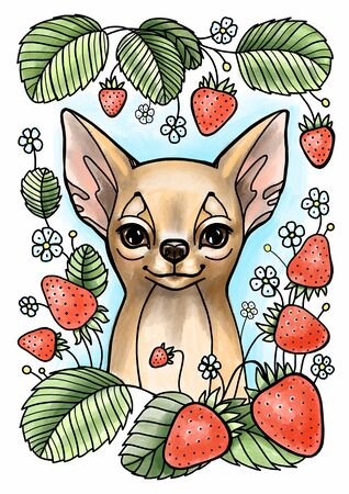 Cute young chihuahua with strawberry of white background. Color illustration.