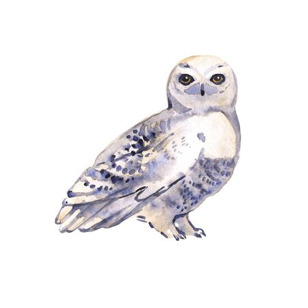 Owl bird watercolor painting hand made isolated on white background. illustration isolated. Watercolor Boho Print Owl on white. Bird design.
