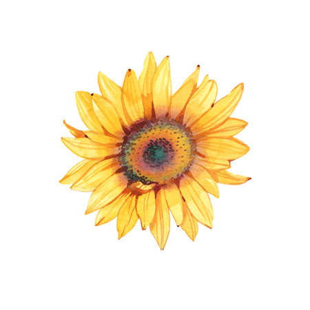 Handpainted watercolor sunflowers. Bright watercolor clipart of sunflowers. Can be used for your project,greeting cards,wedding,cards,bouquets,wreaths,invitation
