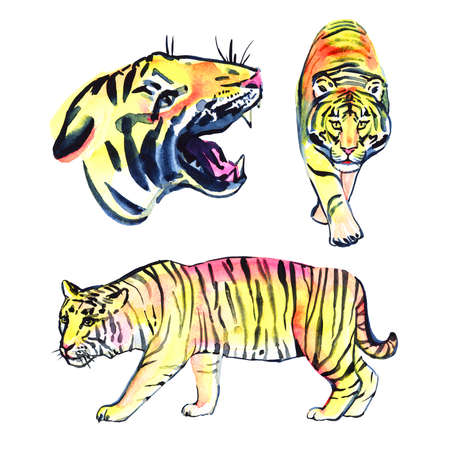 Hand drawn watercolor summer illustration with tiger. Perfect for wallpapers, web page backgrounds, surface textures