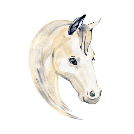 Watercolor painting of horse portrait isolated on white background.