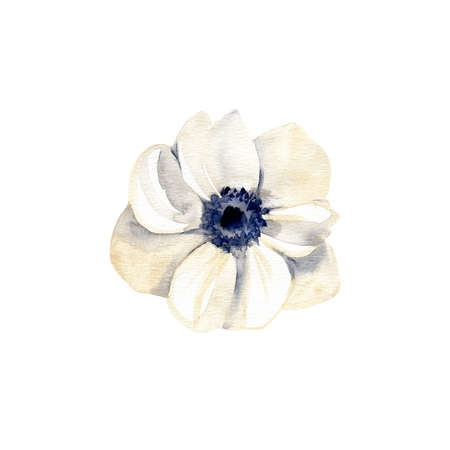 Watercolor white anemone flower. Hand drawn illustration isolated on white background. 写真素材