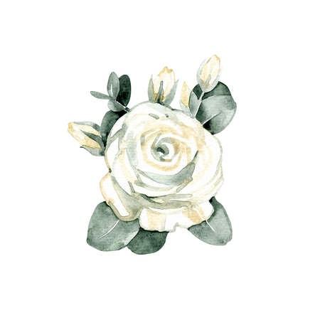 White rose, isolated on white background. Watercolor illustration