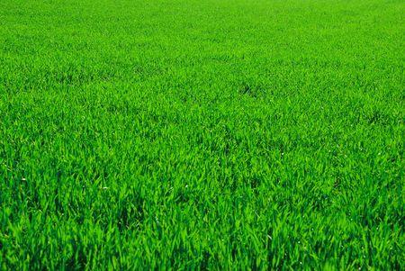 green back: green field