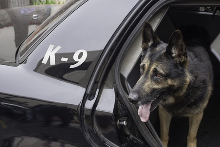 police dog: Police K-9 in Patrol Car