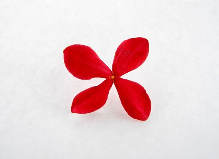 tiny red lantana flower isolated on a white background