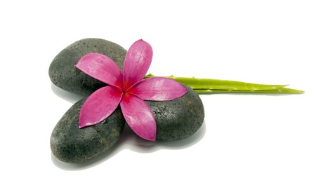 Massage stones with plumeria and aloe vera plant