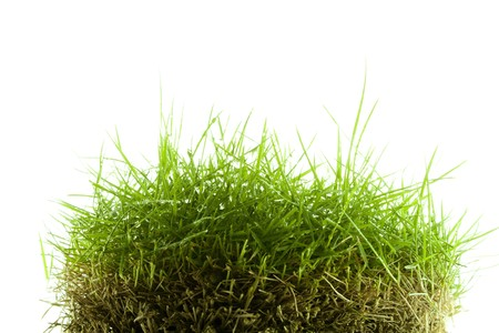 Mound of wet Zoysia grass isolated on white background