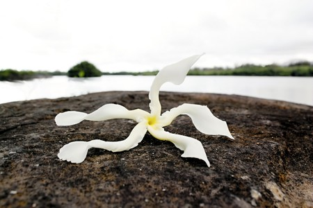 Strange tropical flower on a lava rock with ocean in background Stock Photo