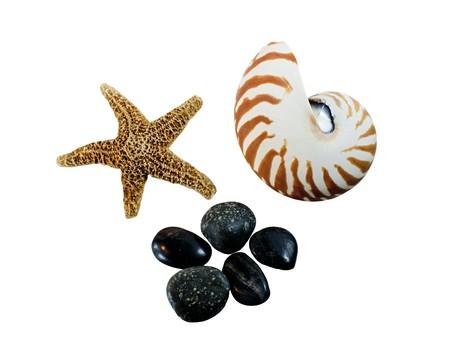 starfish, nautilus seashell and smooth stones on a white background photo