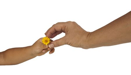 childs hand giving mothers hand a flower isolated on a white background photo