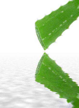 Aloe vera plant dripping reflecting on water Stock Photo - 8213640