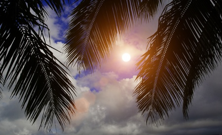 tropical view with palm trees and sun Stock Photo