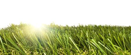 pasto sintetico: parche de cuidados de césped artificial verde sobre un fondo blanco con el sol brillando a través de