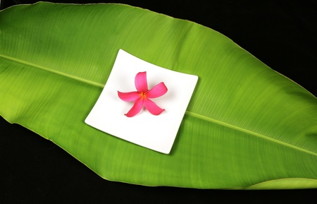 Tropical plumeria flower on a white plate on a large green banana leaf and black background Stock Photo