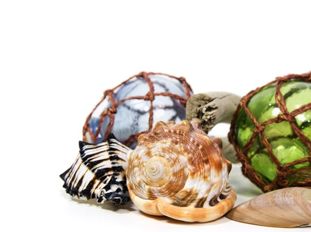 drift: seashells arranged in a still life display on a white background Stock Photo