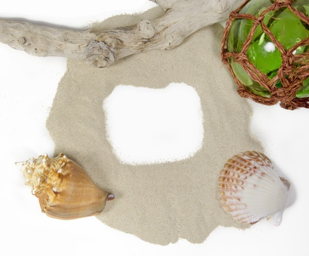 seashells arranged in a still life display on a white background Standard-Bild