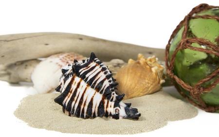 redes de pesca: conchas de mar dispuestos en una pantalla de naturaleza muerta sobre un fondo blanco Foto de archivo