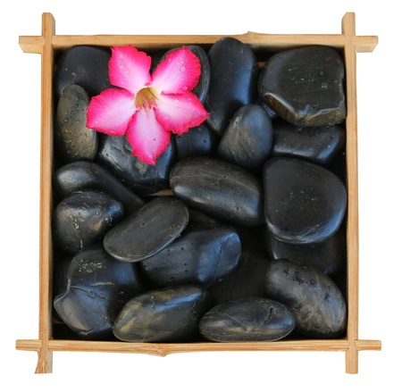 red flower on a bed of black rocks in a bamboo frame photo
