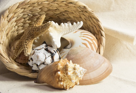 sea shells in a basket still life Standard-Bild