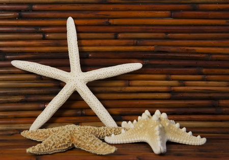 three starfish with a bamboo background Stock Photo
