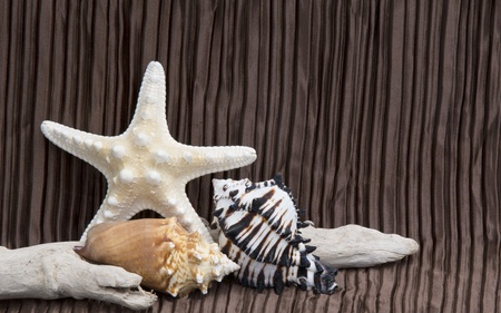 seashells driftwood on brown satin background