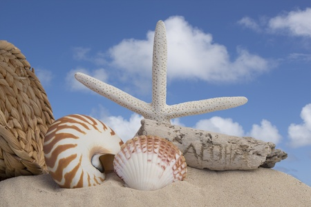 seashells and sand with a blue sky background Stock Photo