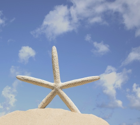 a single starfish on sand with blue sky background