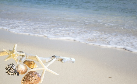 collection of seashells on the shore of the ocean Stock Photo