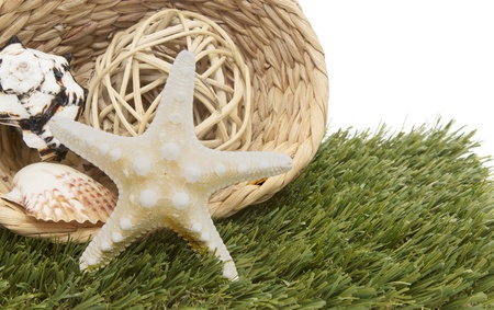 seashells and starfish in basket on green grass