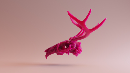 Jackalope  Skull scan thingiverse.com scsuvizlab - (CC Attribution) Stock Photo