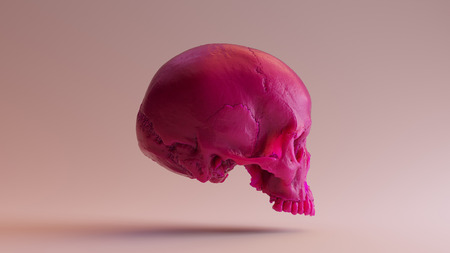 Pink Skull  3d Illustration  3d Rendering  - skull scan is from SCSU VizLab - thingiverse.comscsuvizlababout - (CC Attribution)