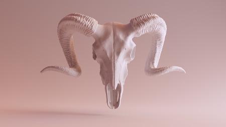 details: Ram Skull