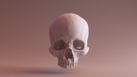 頭蓋骨フロント - 頭蓋骨スキャンはSCSU VizLabから - thingiverse.com/scsuvizlab/about - (CCアトリビューション) 写真素材 - 91340777