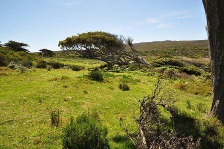 Windswept landscape and tree