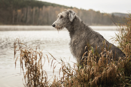 The dog is sitting on the bank of the dam. Stock Photo