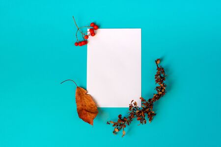 A clean sheet of white paper on a blue background, with a fallen leaf, a dry twig and a rowan berries on corners.