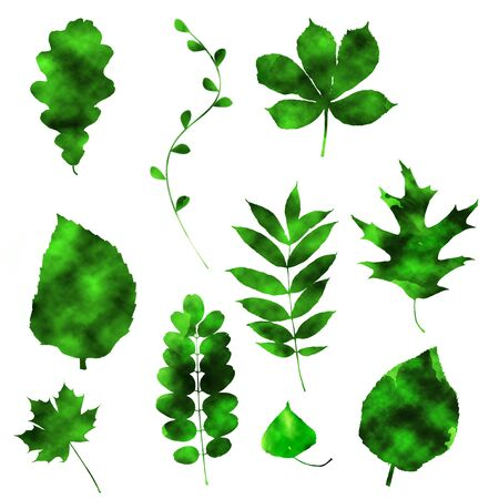 Hand draw green leaves of different deciduous trees with grunge effect isolated on white background.