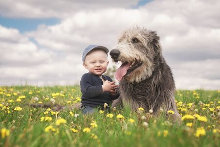 A little Caucasian baby boy in a baseball cap sits next to his big Irish wolfhound friend in a meadow full of blooming dandelions with a cloudy sky in the background. Stock Photo