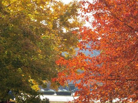 Autumn Tree Colors Фото со стока