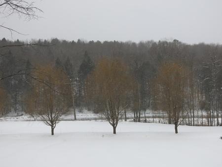 3 Trees Stock Photo - 18738454