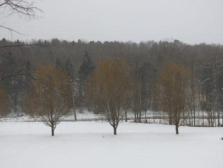 3 Trees Banco de Imagens