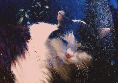 B W cat behind the window Фото со стока