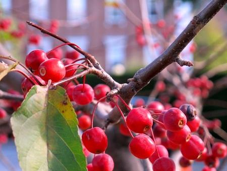 Extreme Berries