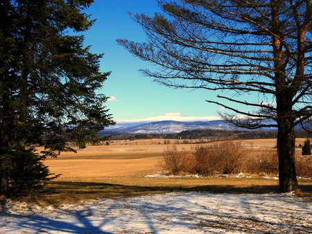 Distant White Mountains and golden grass with clear blue sky Banco de Imagens